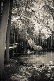 Passagens de madeira em O Lago das Cisnes e em Iris Gardens Foto de Stock