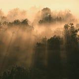 Passages de lumière du soleil par des arbres images stock