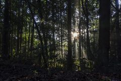 Passaggi di alba di mattina attraverso la foresta fotografia stock