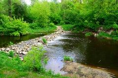 Passaggi di Sanzile del fiume attraverso la foresta verde Immagini Stock