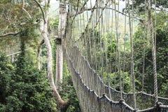 Passaggi pedonali del baldacchino in foresta pluviale tropicale, parco nazionale di Kakum, Gha immagini stock libere da diritti
