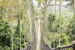 Passaggi pedonali del baldacchino in foresta pluviale tropicale, parco nazionale di Kakum, Gha immagine stock