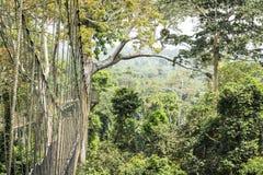 Passaggi pedonali del baldacchino in foresta pluviale tropicale, parco nazionale di Kakum, Gha fotografie stock libere da diritti
