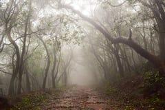 Passaggi pedonali nebbiosi della stazione della collina di matheran durante il monsone Fotografia Stock