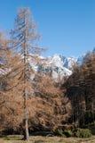Passaggio di Alpe Fotografia Stock Libera da Diritti