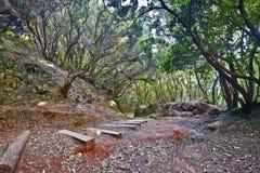 Passaggio di camminata con i punti nella foresta dell'alloro nell'isola di Tenerife Immagini Stock