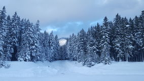 Passaggio di Snowqualmie, Washington 3 Immagini Stock Libere da Diritti