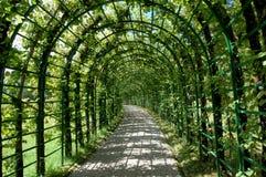 Passaggio invaso verde Fotografie Stock