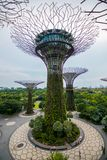 Passaggio pedonale al boschetto di Supertree ai giardini dalla baia a Singapore fotografie stock libere da diritti