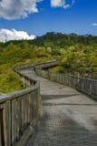 Passaggio pedonale al geyser di Whakarewarewa al parco termico di Te Puia nel geoth Fotografia Stock Libera da Diritti