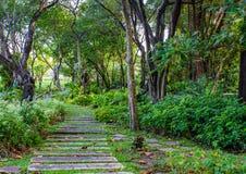 Passaggio pedonale all'il parco verde fotografia stock