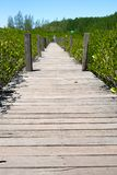 Passaggio pedonale alla prerogativa di natura e ForestKlaeng in Tailandia fotografia stock