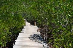 Passaggio pedonale alla prerogativa di natura e ForestKlaeng in Tailandia immagini stock