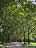 passaggio pedonale allineato dell'albero Immagini Stock
