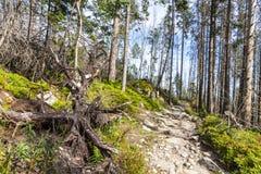 Passaggio pedonale in alte montagne di Tatras, Slovacchia Fotografie Stock