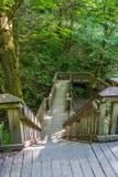Passaggio pedonale attraverso la foresta 2 Fotografia Stock Libera da Diritti