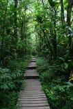 Passaggio pedonale attraverso la foresta dell'Hawai Fotografia Stock