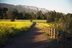 Passaggio pedonale attraverso senape gialla verso le montagne di Topa Topa in primavera, Ojai, California, U.S.A. Fotografia Stock