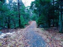 Passaggio pedonale boscoso fotografia stock libera da diritti