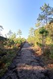 Passaggio pedonale con gli alberi ed il cielo blu verdi Immagine Stock Libera da Diritti