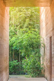 Passaggio pedonale concreto accanto alla parete marrone dell'argilla con sfondo naturale verde Immagine Stock Libera da Diritti