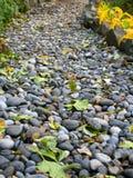 Passaggio pedonale dei ciottoli sparsi con le foglie cadute Immagini Stock