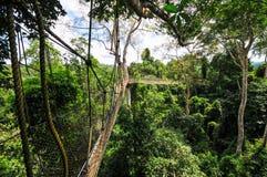 Passaggio pedonale del baldacchino del parco nazionale di Kakum Fotografia Stock
