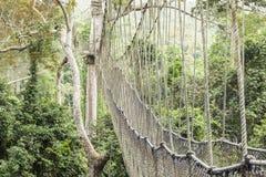 Passaggio pedonale del baldacchino nel parco nazionale di Kakum, Ghana immagini stock