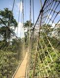 Passaggio pedonale del baldacchino nel parco nazionale di Kakum, Ghana, Africa occidentale immagine stock libera da diritti