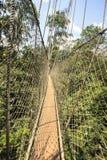 Passaggio pedonale del baldacchino nel parco nazionale di Kakum, Ghana, Africa occidentale fotografie stock libere da diritti