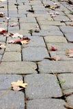 Passaggio pedonale del Cobblestone di autunno Fotografie Stock