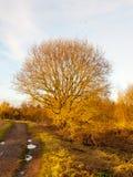 Passaggio pedonale del percorso del paese con il grande paesaggio nudo del cielo dell'albero Immagini Stock Libere da Diritti