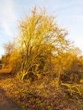 Passaggio pedonale del percorso del paese con il grande paesaggio nudo del cielo dell'albero Fotografia Stock Libera da Diritti