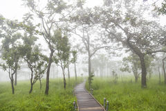 Passaggio pedonale del ponte nella foresta Immagini Stock