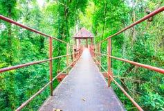 Passaggio pedonale del ponte sospeso con l'albero nel parco pubblico della foresta fotografia stock