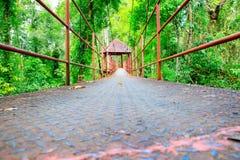 Passaggio pedonale del ponte sospeso con l'albero nel parco pubblico della foresta fotografie stock libere da diritti