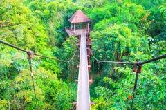 Passaggio pedonale del ponte sospeso con l'albero nel parco pubblico della foresta immagini stock libere da diritti