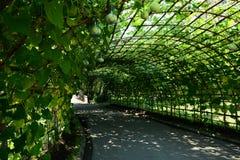 Passaggio pedonale del tunnel delle piante Fotografia Stock