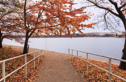 Passaggio pedonale del Washington DC al bacino di marea Immagine Stock