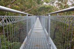 Passaggio pedonale della cima d'albero in foresta pluviale fotografia stock