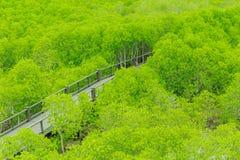 Passaggio pedonale della foresta della mangrovia Fotografia Stock