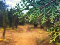 Passaggio pedonale della foresta sulla montagna sopra il mare immagini stock libere da diritti