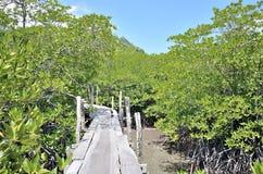 Passaggio pedonale della mangrovia Immagine Stock