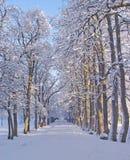 Passaggio pedonale di inverno Fotografie Stock