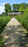 Passaggio pedonale di legno attraverso i cattails che conducono al gazebo di legno Fotografia Stock Libera da Diritti