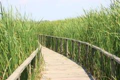 Passaggio pedonale di legno dell'acqua immagine stock libera da diritti
