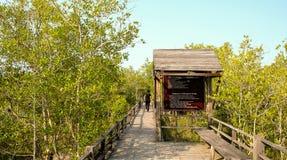Passaggio pedonale di legno della traccia fra le mangrovie con la gente posteriore in Tailandia Fotografia Stock Libera da Diritti