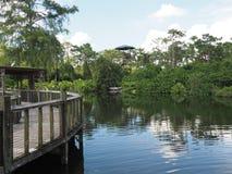 Passaggio pedonale di legno e dell'acqua in una giungla Immagine Stock Libera da Diritti
