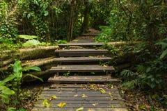 Passaggio pedonale di legno in foresta Immagini Stock Libere da Diritti