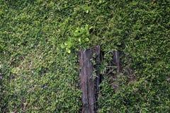 Passaggio pedonale di legno nel parco Fotografia Stock Libera da Diritti